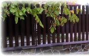 Забор штакетный металлический. - foto 0