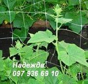 Сетки пластиковые садовые,  ассортимент - foto 1